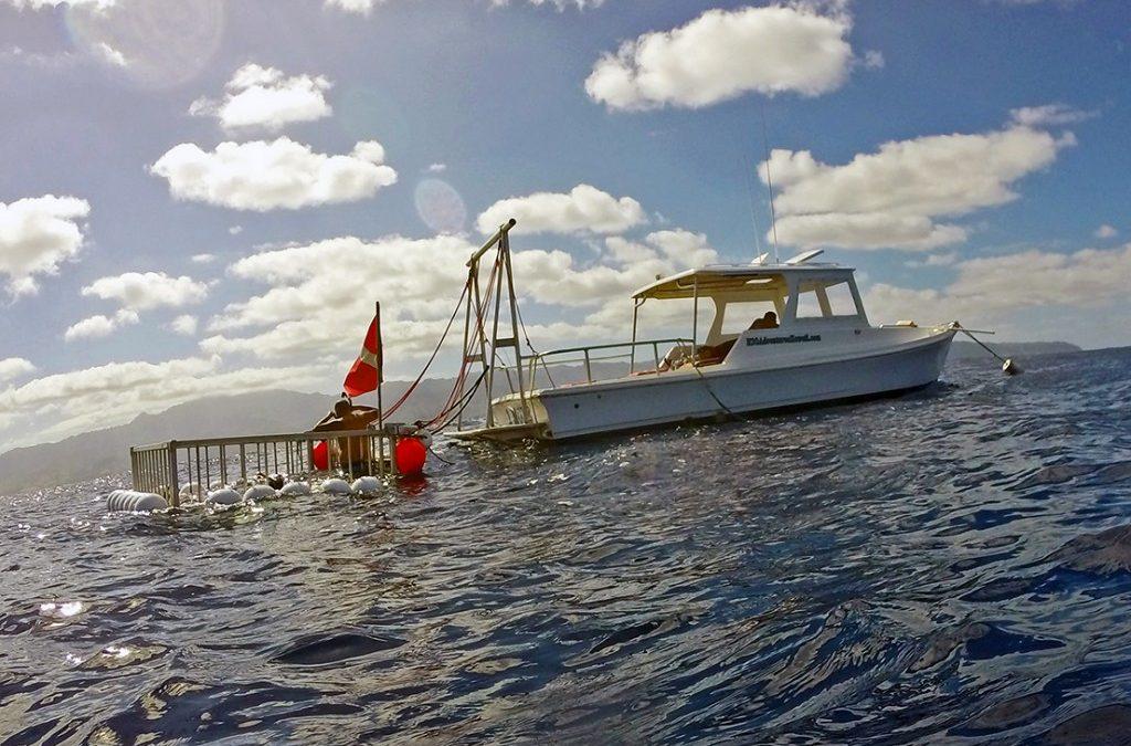 New Business! Hawaii Adventure Diving Shark Dives!
